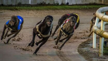 Greyhound Races To Follow In 2021